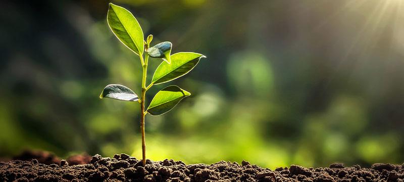 Zentratex setzt sich für Nachhaltigkeit ein. Hier: Ein wachsender Baum.