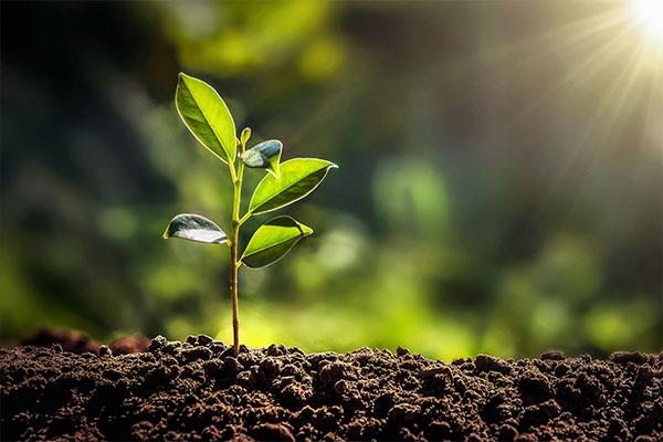 Nachhaltigkeit durch Einsatz. Hier: Ein junger Baum im Wachstum.