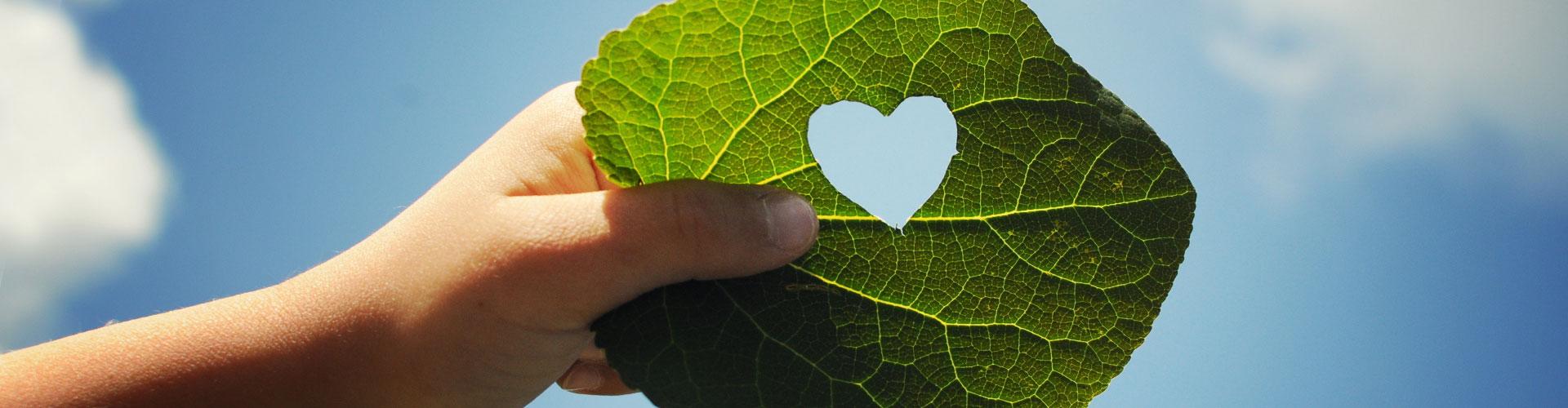 Nachhaltigkeit wird bei Zentratex groß geschrieben. Nur so können wir Natur und Umwelt schonen und schützen. Im Bild: Ein Blatt mit Herzform, gehalten von Kinderhand.